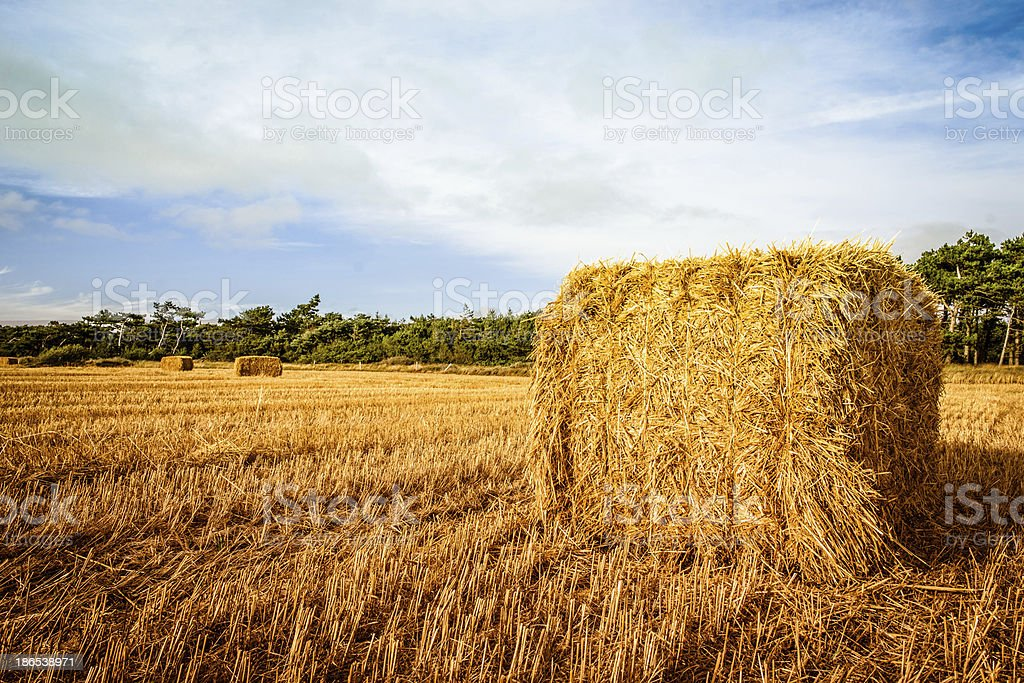 Harvested straw bale royalty-free stock photo