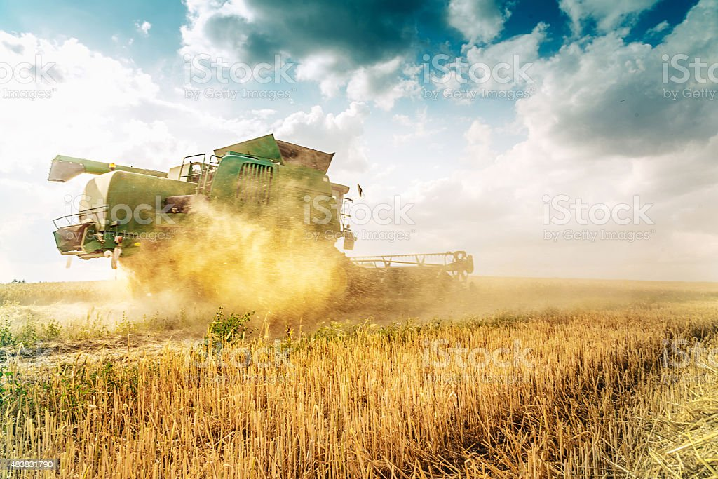 harvester cutting the grain in summer dust stock photo