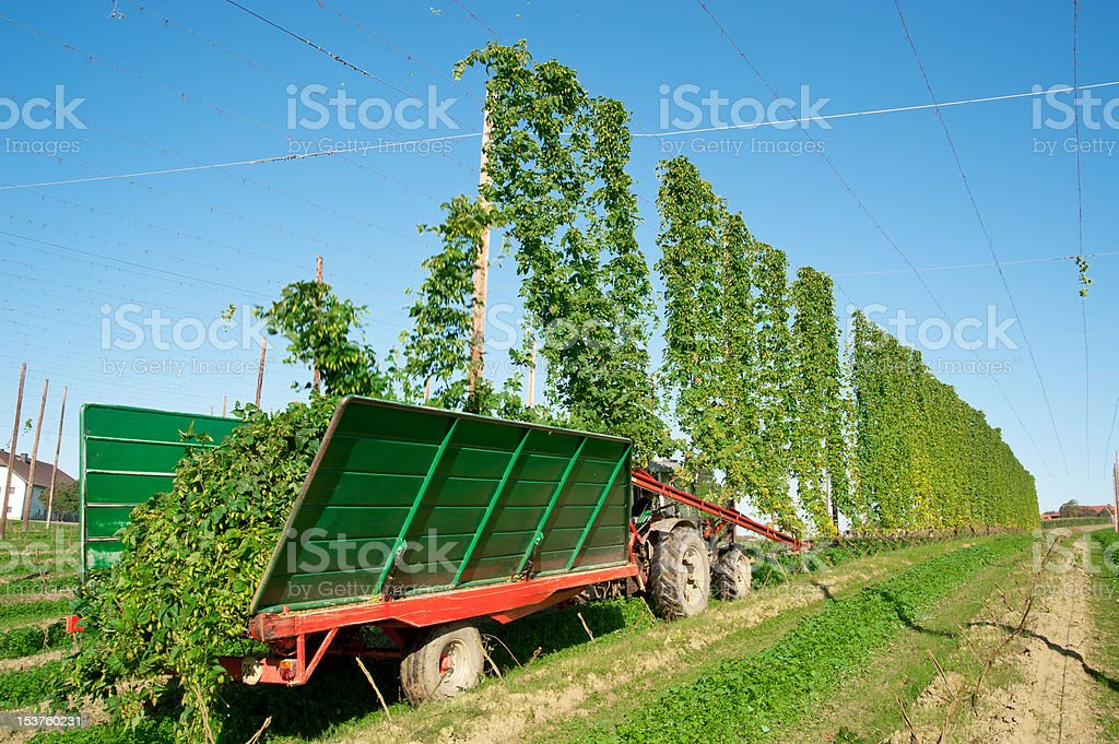 Harvester in a Hop Plantage royalty-free stock photo