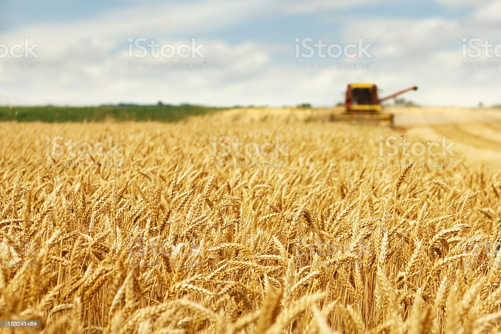 Harvester in action stock photo