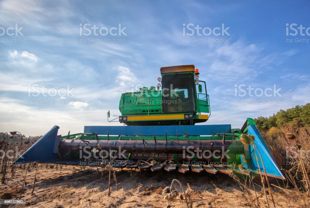 harvester in the field mowing sunflower seeds. stock photo