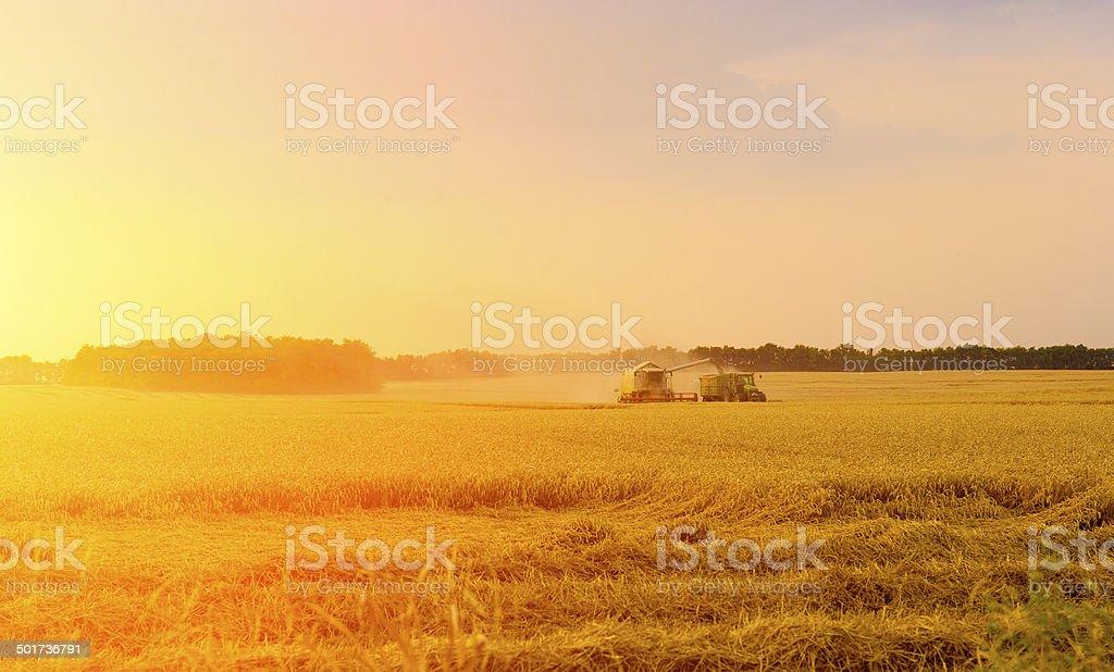 Harvester in work stock photo