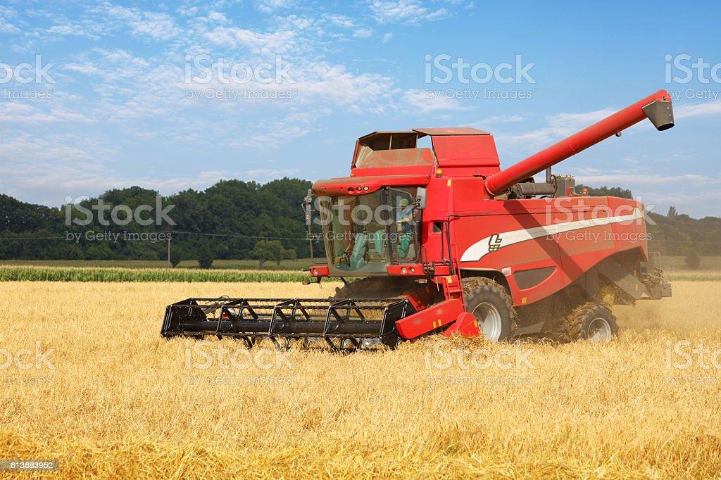 Harvester on wheat field, harvesting stock photo