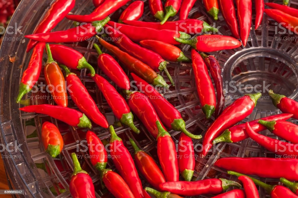 Harvesting chilli peppers. Preparing for drying spicy seasoning. Electric food dryer. stock photo