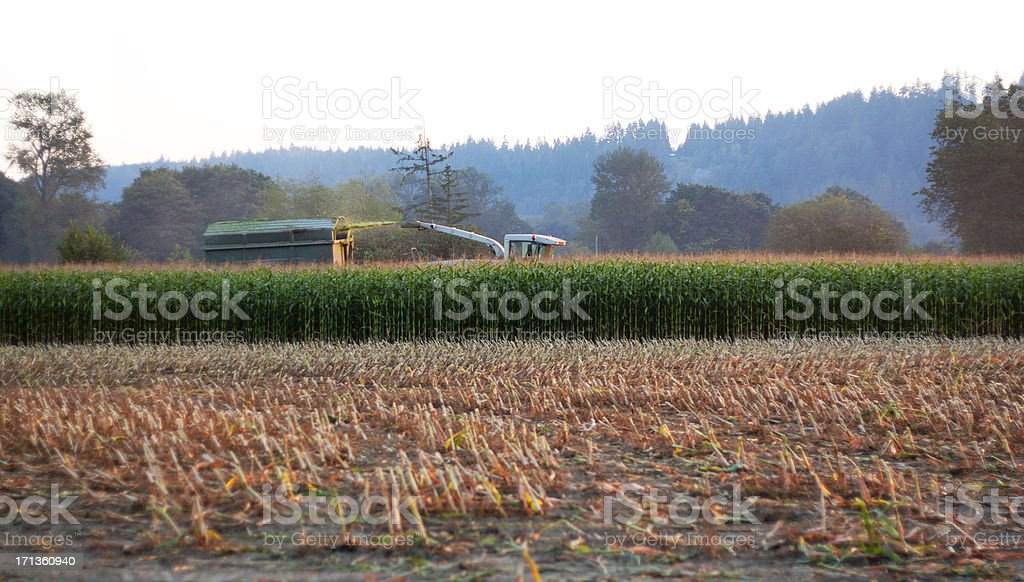 Harvesting Corn Silage as the Sun Sets royalty-free stock photo