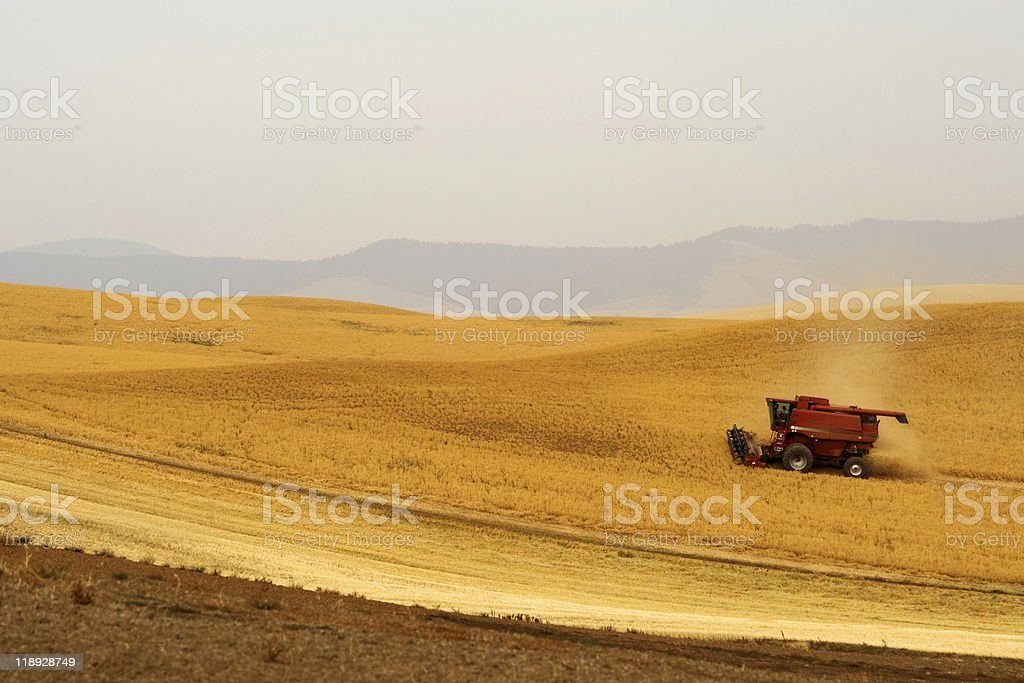 Harvesting crops stock photo