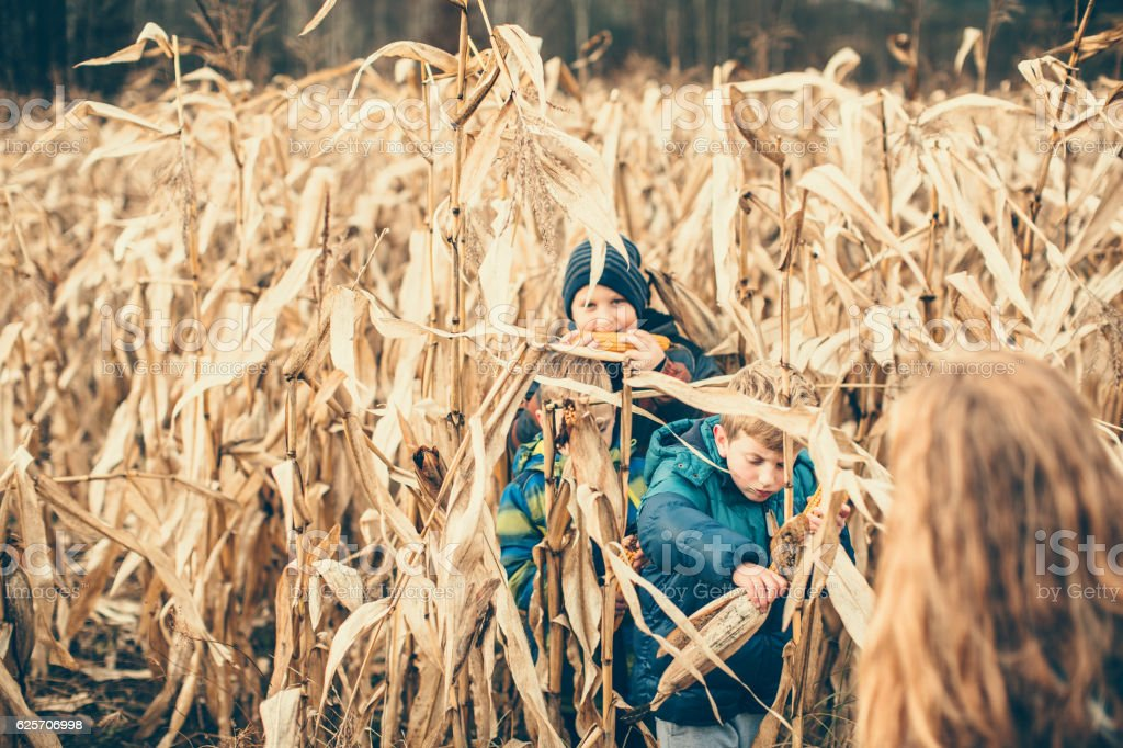 Harvesting crops stock photo