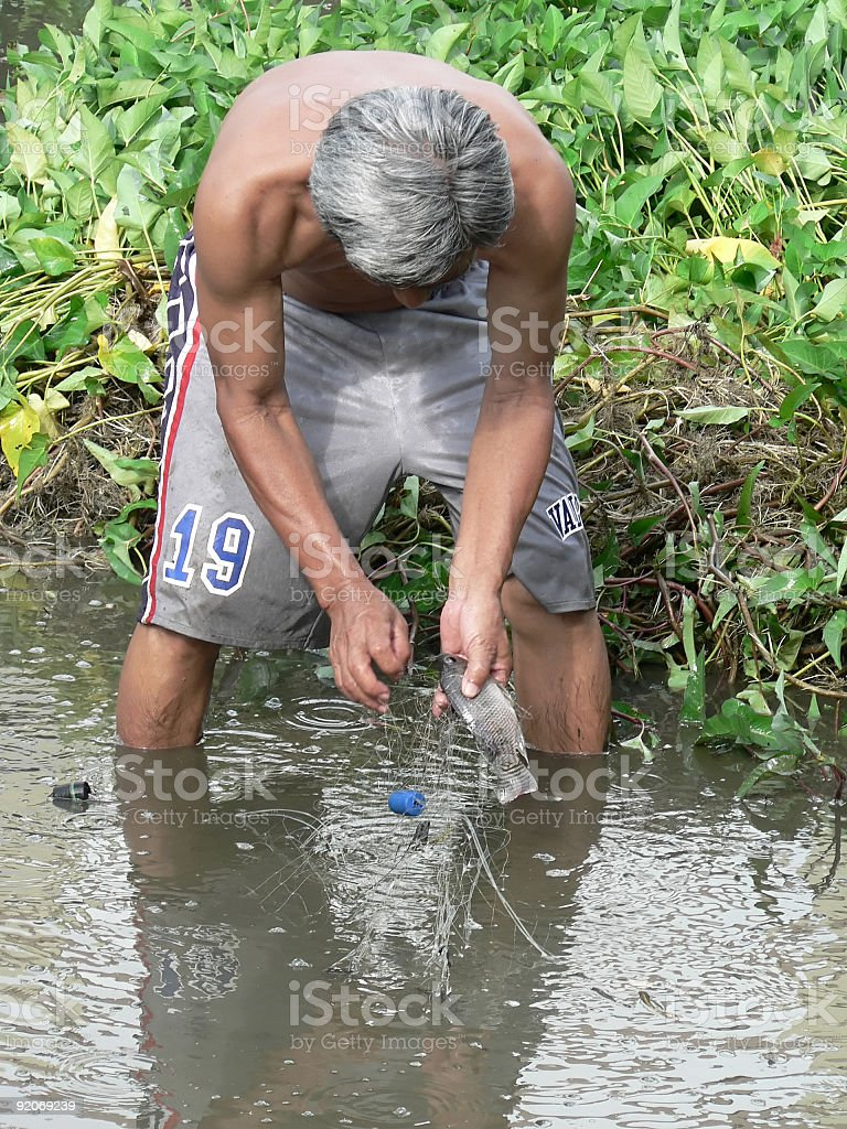 Harvesting Fish stock photo