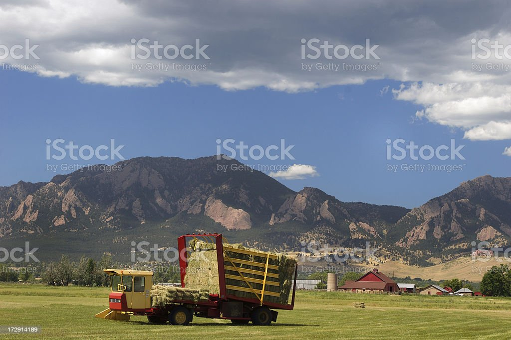 Harvesting hay royalty-free stock photo