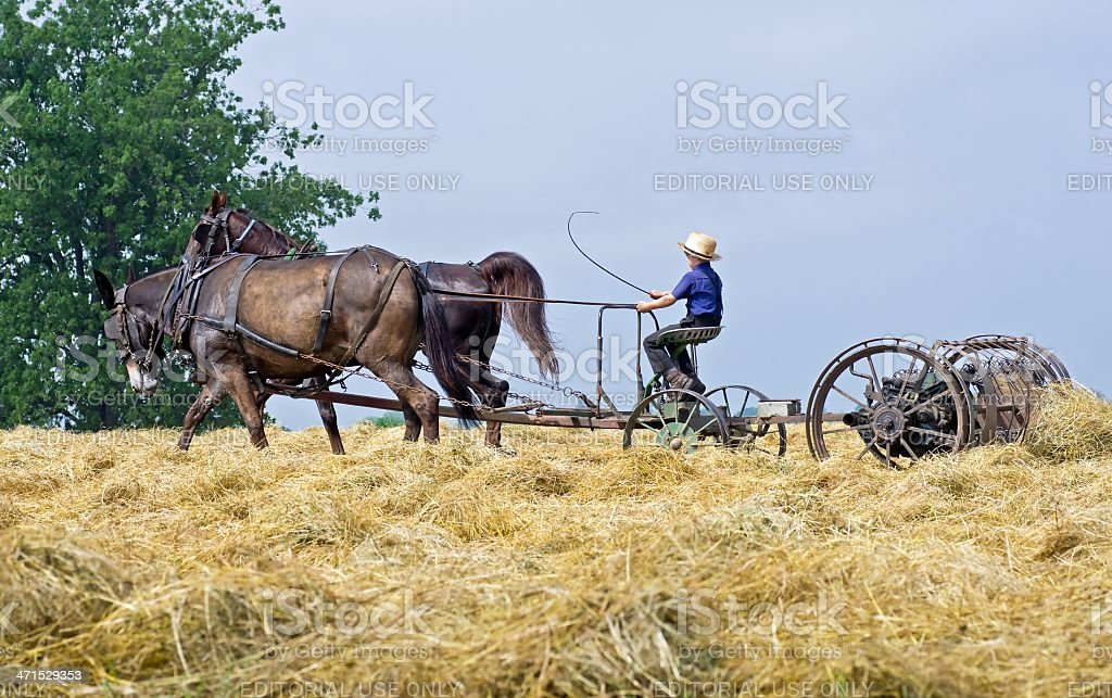 Harvesting Hay royalty-free stock photo