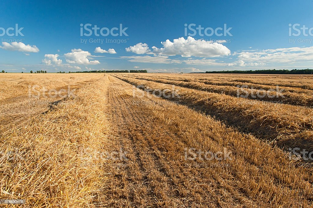 harvesting in a wheat field Lizenzfreies stock-foto