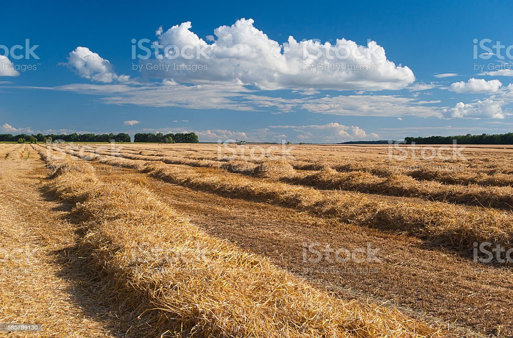 harvesting in a wheat field Lizenzfreies stock-foto