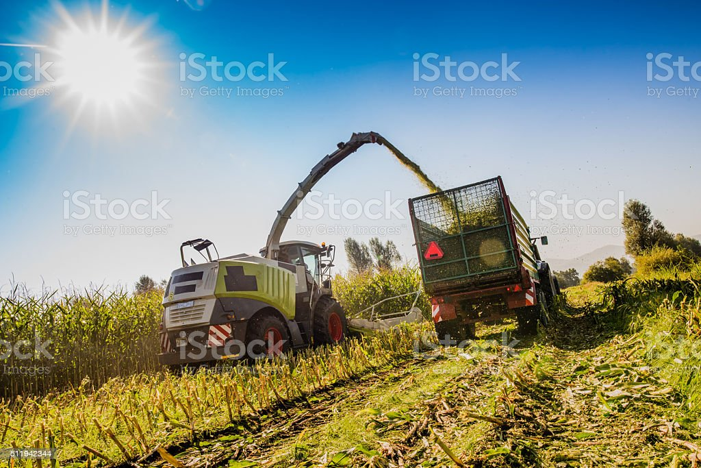 Harvesting in field stock photo