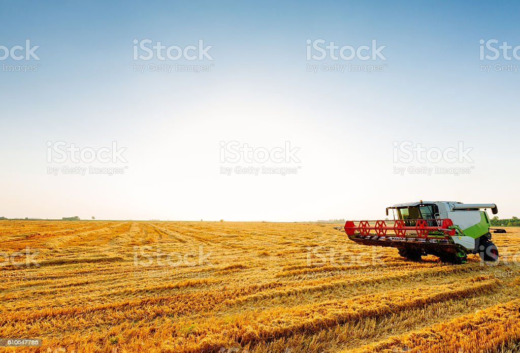 Harvesting in summer time stock photo