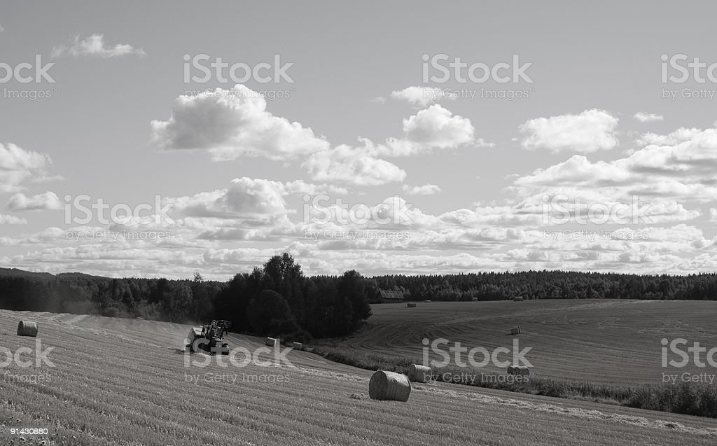 Harvesting in Sweden royalty-free stock photo