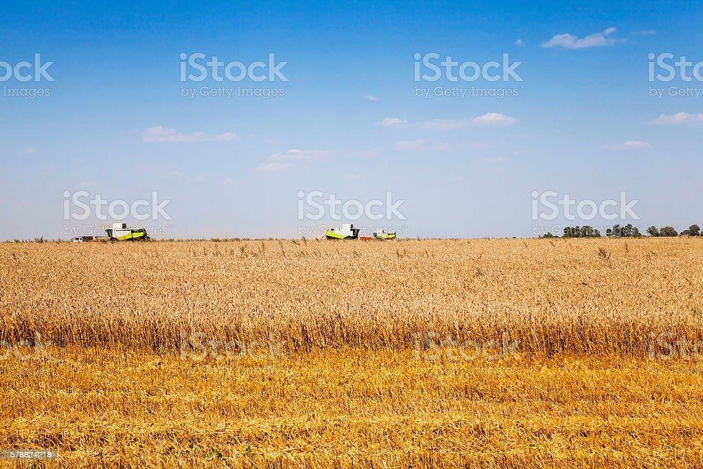 harvesting of cereals stock photo