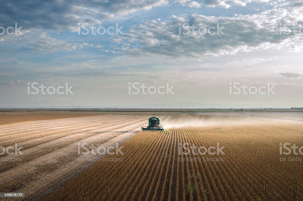 Harvesting of soy bean field stock photo