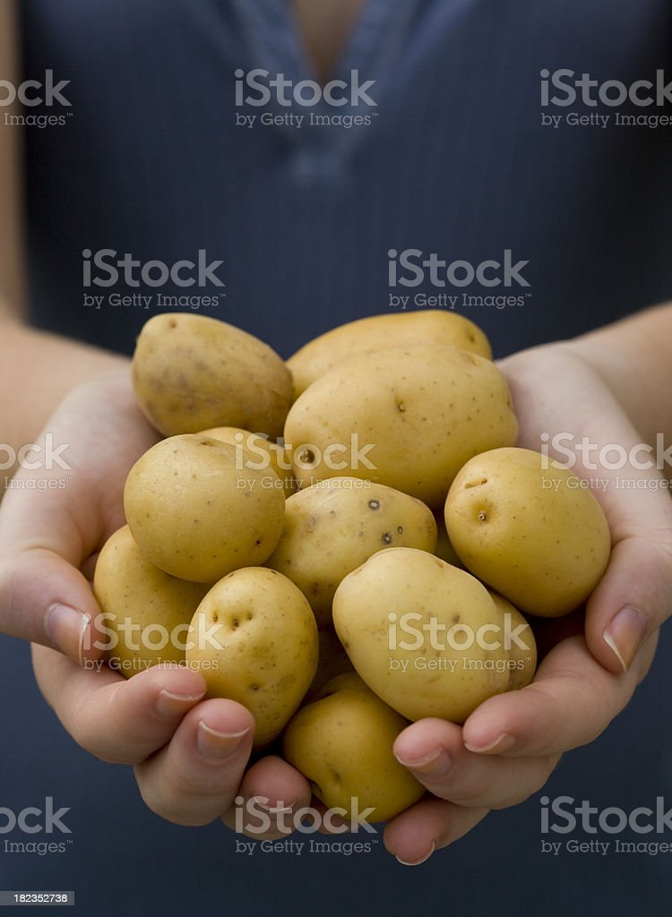 Harvesting potatoes royalty-free stock photo