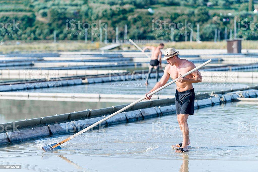 Harvesting salt in Hot Summer stock photo