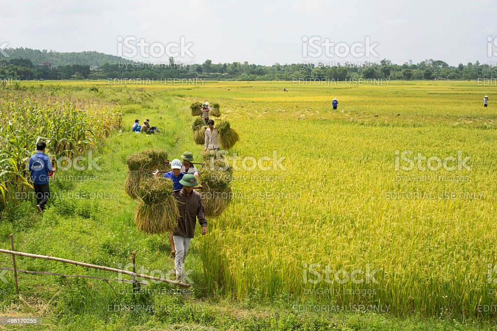 Harvesting season stock photo