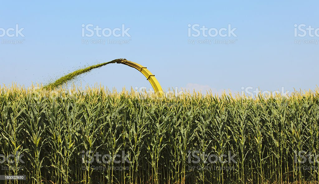 Harvesting Silage royalty-free stock photo