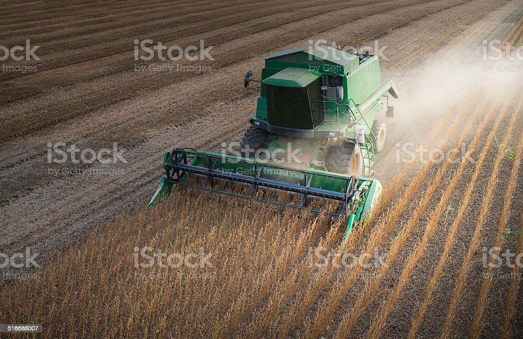Harvesting  soybean stock photo