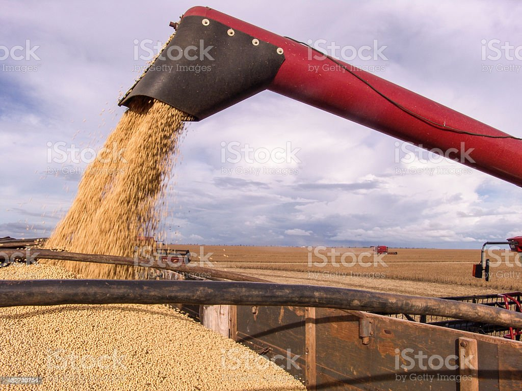 Harvesting Soybeans stock photo