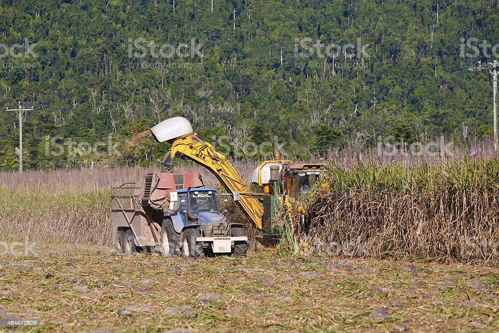 Harvesting sugar cane with machines stock photo