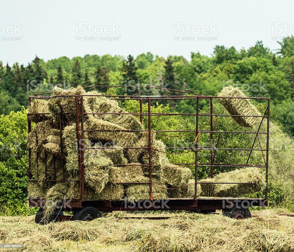 Harvesting Summer Hay stock photo