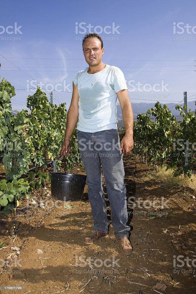harvesting time royalty-free stock photo