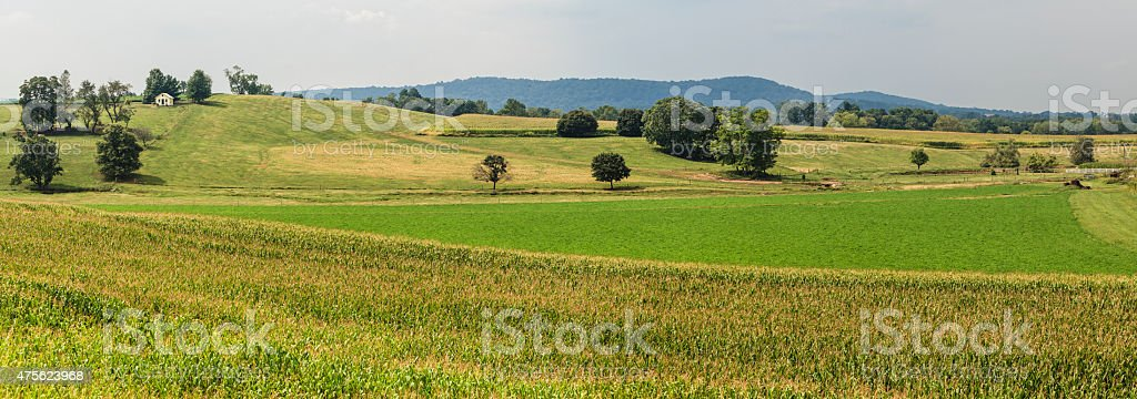 Harvesting's time. Farms & fields, Pennsylvania Dutch Country, Lancaster county stock photo