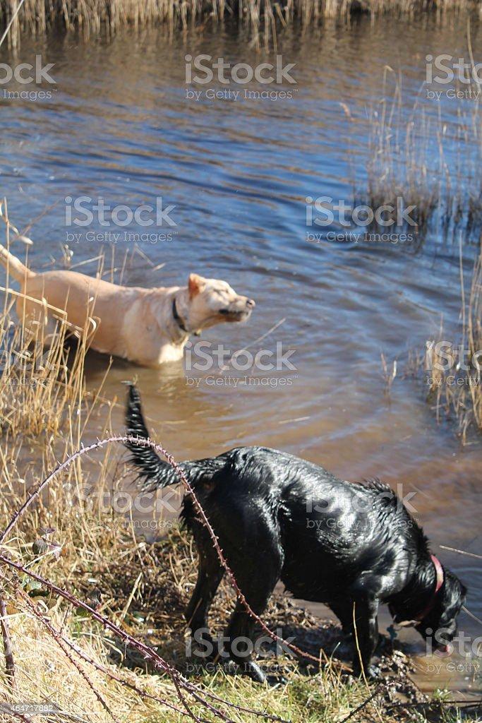 Harvey and Scamp at Snettisham Beach stock photo