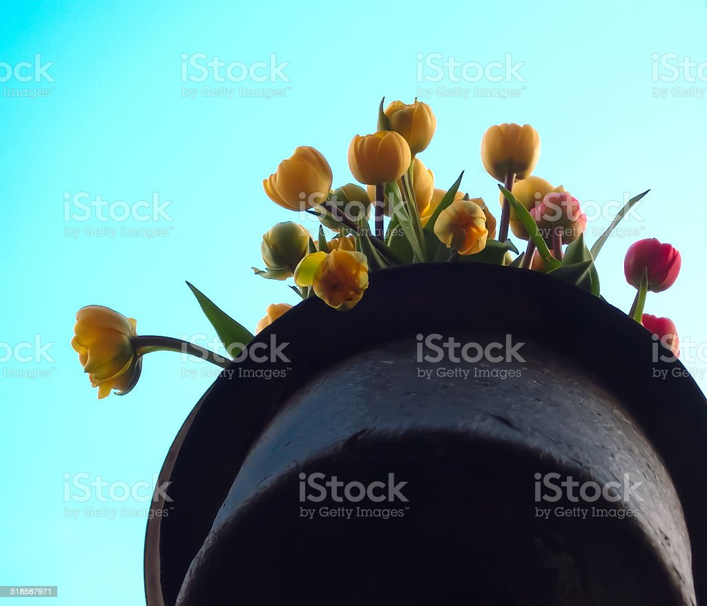 hat in Holland with yellow and red tulips royalty-free stock photo