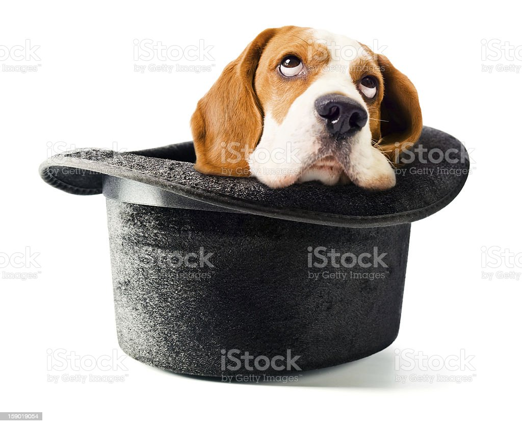 Hat of the wizard with a dog royalty-free stock photo