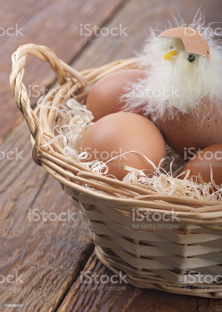 Hatched chicken in a basket royalty-free stock photo