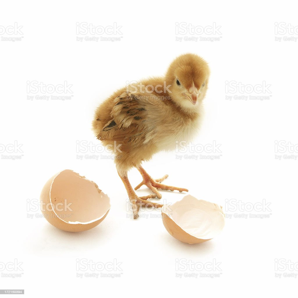 Hatched stock photo