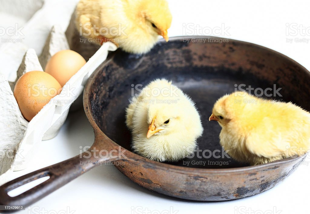 Hatched royalty-free stock photo