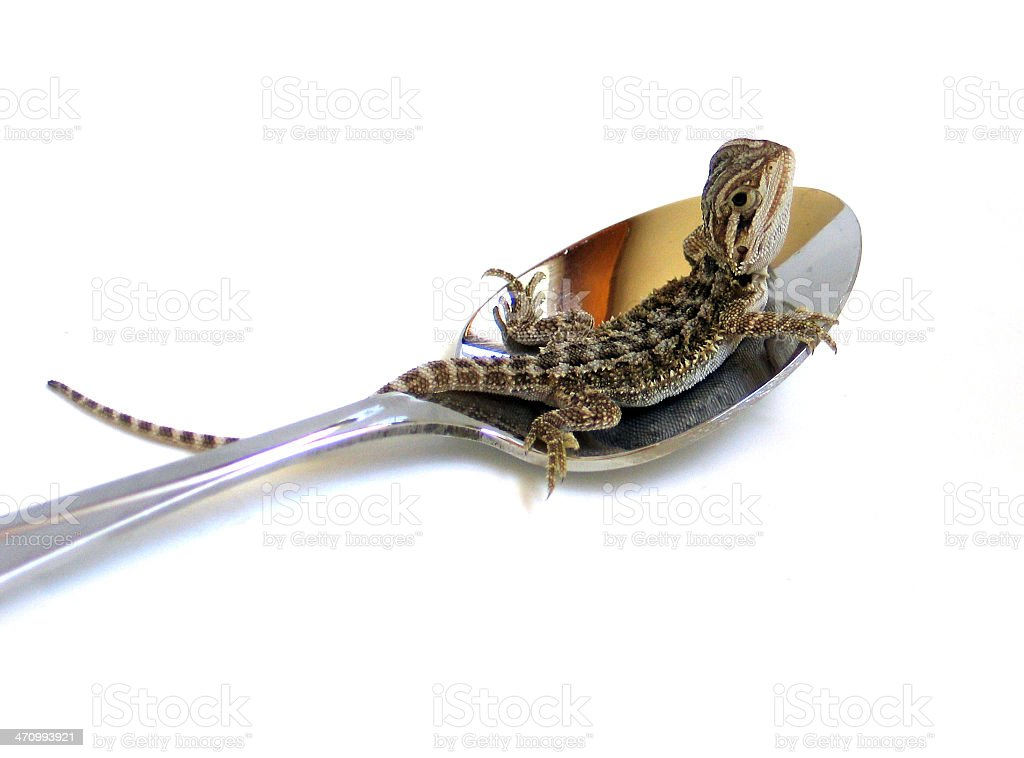 Hatchling & Spoon 2 royalty-free stock photo