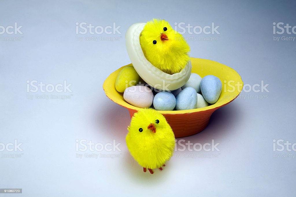 Hatchlings royalty-free stock photo