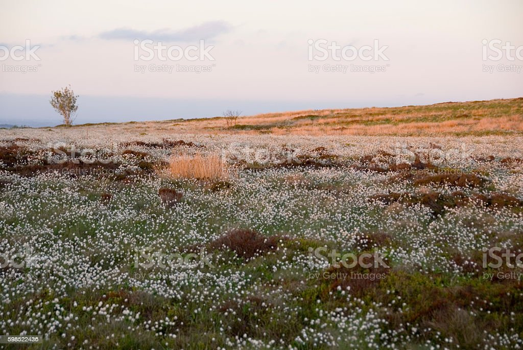 Hathersage Moor, Peak District, UK stock photo