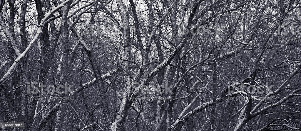 Haunted Forest stock photo