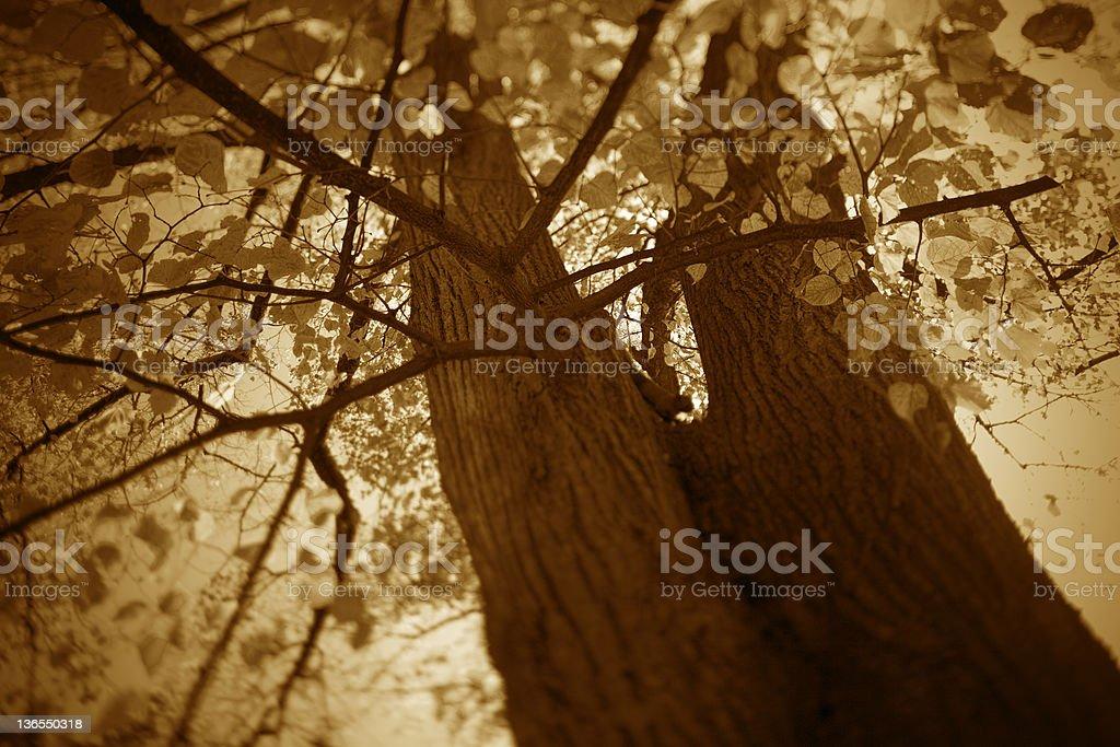 Haunted trees royalty-free stock photo