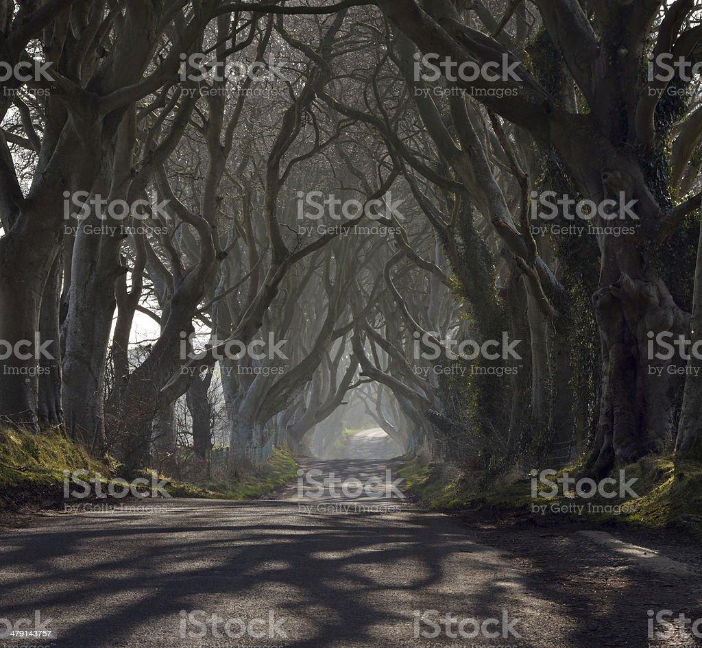 Haunted wood royalty-free stock photo