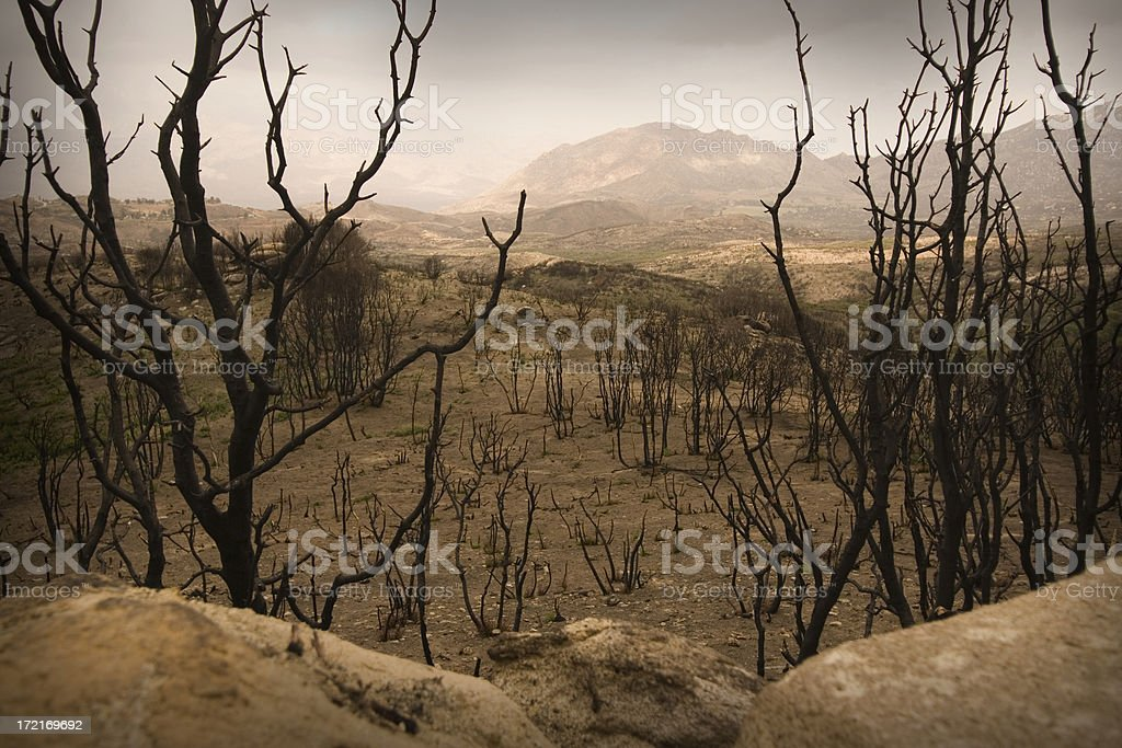 Haunting remains of a brush fire in Southern California royalty-free stock photo
