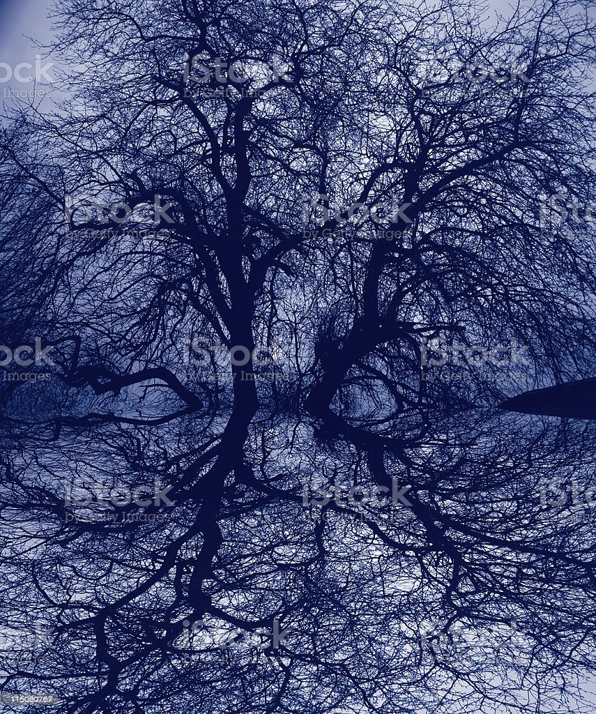 Haunting tree branches stock photo
