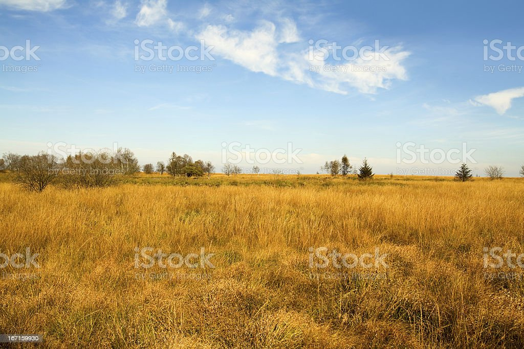 Hautes Fagnes (Hoher Venn) in Eifel stock photo