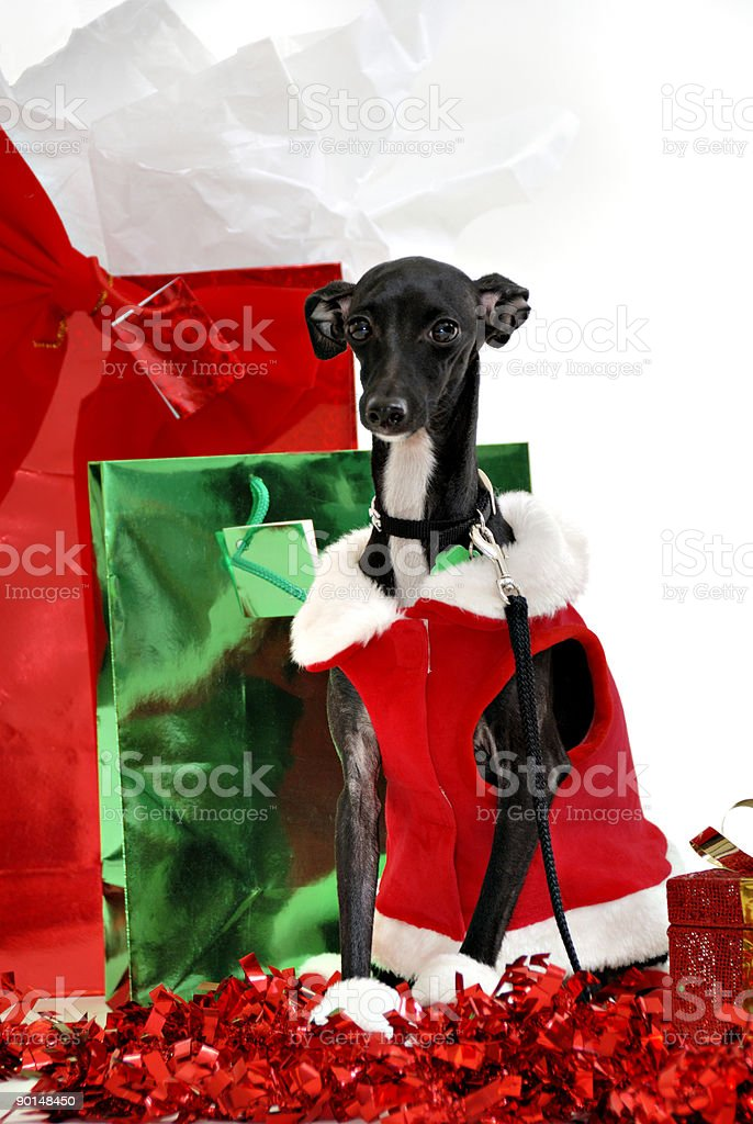 Have A Doggone Great Christmas stock photo
