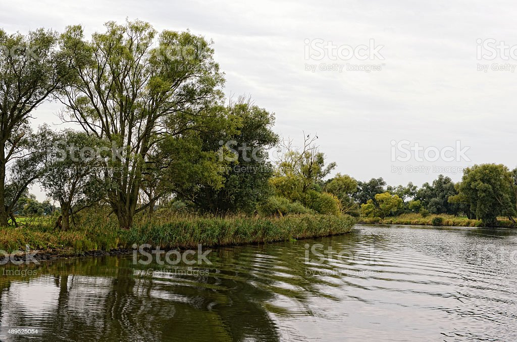 Havel river landscape with willow tree and meadows stock photo