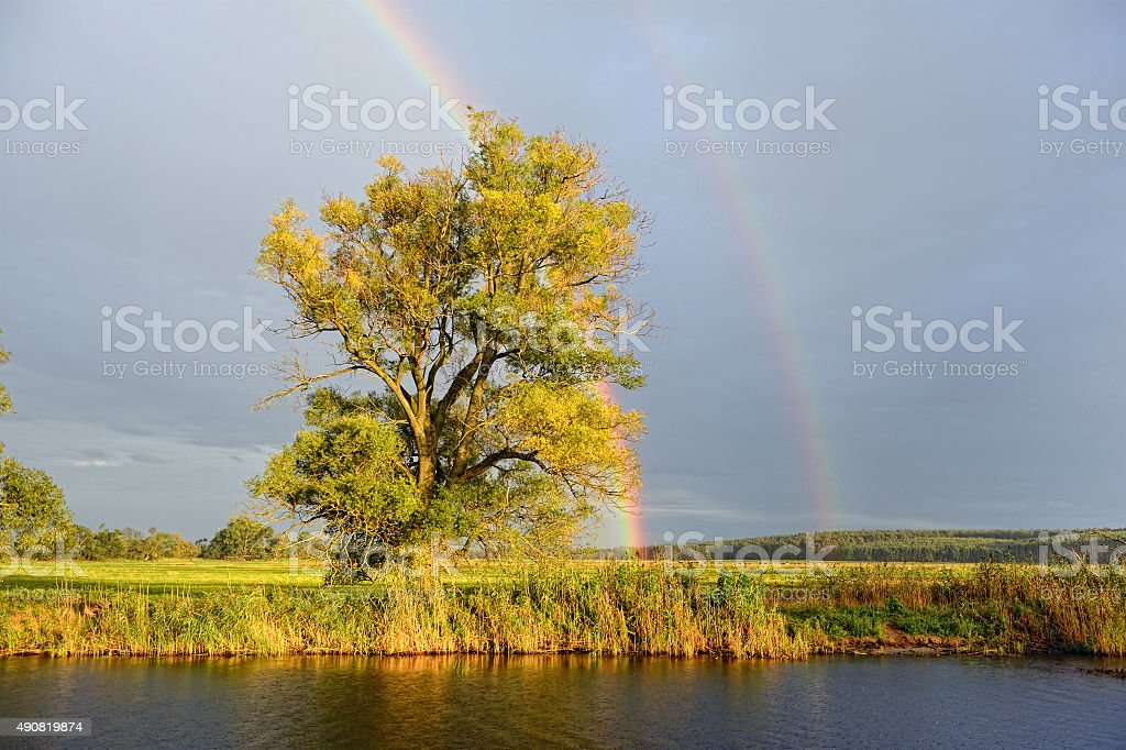 Havel river landscape with willow tree and rainbow after rain. stock photo