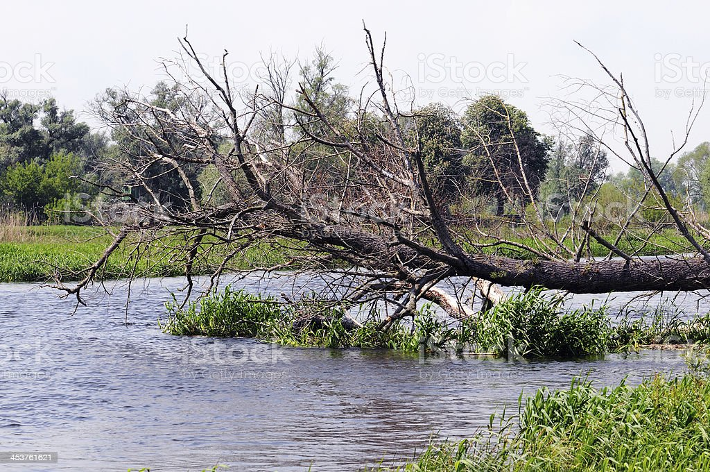 Havel river landscape with willow tree (Brandenburg) royalty-free stock photo